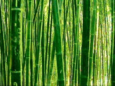 Huntington Library - bamboo aura - atomjacked February 1, 2001